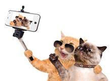 Katzen, die ein selfie mit einem Smartphone nehmen Lizenzfreies Stockbild