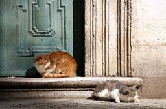 Katzen in Dubrovnik Lizenzfreies Stockbild