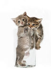 Katzen in einem Wasserglas Stockbilder