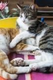 Katzen in einer freundlichen Haltung Stockfotografie