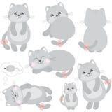 Katzen eingestellt Stockbild