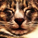 Katzen-Gesicht Stockfotografie