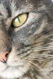 Katzen-Gesicht Stockbild