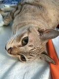 Katzen, Haustier Stockfoto