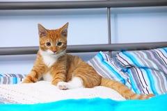 Katzen-Haustiermiezekatze der Tiere zu Hause - rote nette kleine auf Bett Lizenzfreie Stockbilder