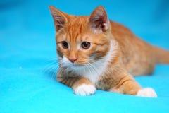 Katzen-Haustiermiezekatze der Tiere zu Hause - rote nette kleine auf Bett Stockfotos