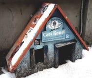 Katzen-Herberge in Riga stockfotografie