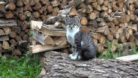 Katzen im Bauernhof-Yard, Kitten Looking in camera, Pussy Cat Sitting im Garten stockbild