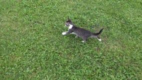Katzen im Bauernhof-Yard, Kitten Looking in camera, Pussy Cat Sitting im Garten lizenzfreies stockbild