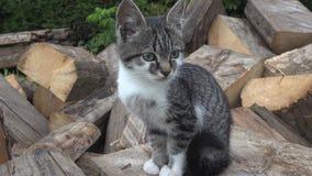 Katzen im Bauernhof-Yard, Kitten Looking in camera, Pussy Cat Sitting im Garten lizenzfreie stockbilder