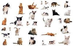 Katzen im Studio Lizenzfreies Stockfoto
