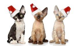 Katzen im Weihnachtsrothut Stockfotografie