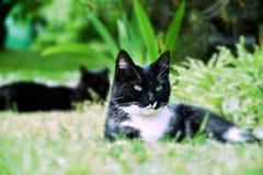 Katzen - Kind und Mutter Stockbild