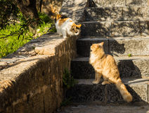 Katzen an Lindos-Stadt in Rodos, Griechenland Lizenzfreie Stockfotos