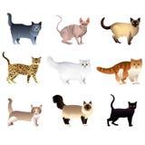 Katzen lokalisiert auf weißem Vektorsatz Lizenzfreies Stockfoto