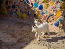 Katzen in Medina von Safi, Marokko lizenzfreie stockbilder