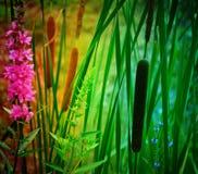 Katzen--O-Neunendstück-Anlage in einem Regenbogen Pallette Lizenzfreie Stockfotografie