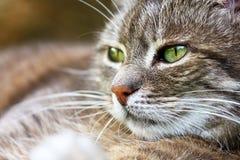 Katzen-Porträt Stockfotografie