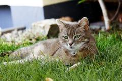 Katzen-Porträt Lizenzfreie Stockfotos