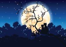 Katzen romantisch unter dem Mondschein, Vektorillustrationen Stockfotos