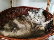 Katzen schlafen in einem Korb glücklich stockbild