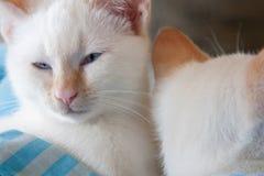 Katzen schlafend Lizenzfreie Stockbilder