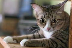 Katzen in Thailand sind morgens nett lizenzfreies stockfoto