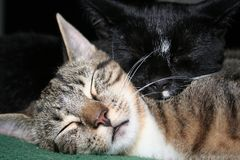 Katzen Tom u. Jake Snuggle III stockbild