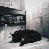 Katzen und Ebenen lizenzfreie stockbilder