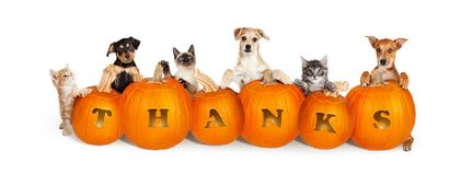 Katzen und Hunde über Danksagungs-Kürbisen stockbilder