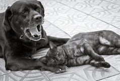 Katzen- und Hundefreundschaft Lizenzfreies Stockbild