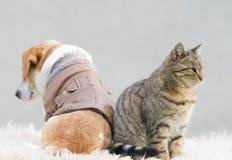 Katzen- und Hundeliebe lizenzfreie stockbilder
