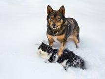 Katzen- und Hundespielen Lizenzfreie Stockbilder