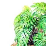 Katzen- und monsterablätter Handgemalte Aquarellillustration Stockfoto
