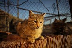 Katzen und Sonnenuntergang Stockbild