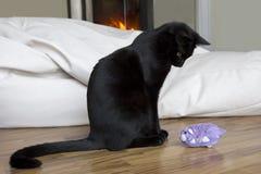 Katzen- und Spielzeugmaus Stockbilder