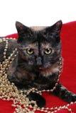 Katzen-und Weihnachtsperlen lizenzfreie stockfotografie