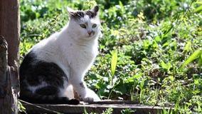 Katzen Video stock video