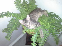 Katzen wachsen auf Bäumen??? stockfotos