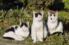 Katzen zusammen Stockbild