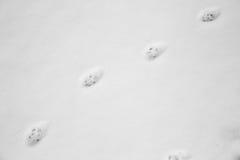 Katzenabdrücke im Schnee Lizenzfreies Stockbild
