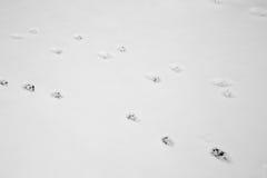 Katzenabdrücke im Schnee Lizenzfreies Stockfoto