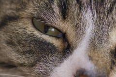 Katzenabschluß des grünen Auges oben Stockfotos