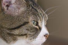 Katzenabschluß des grünen Auges oben Lizenzfreies Stockbild