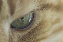 Katzenabschluß des grünen Auges oben Lizenzfreie Stockfotografie
