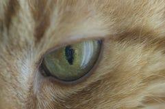 Katzenabschluß des grünen Auges oben Lizenzfreie Stockfotos