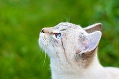 Katzenahaufnahme im Freien stockfoto