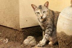 Katzenanstarren schwermütig Stockfotos
