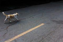 Katzenarbeit über Straße Lizenzfreies Stockbild