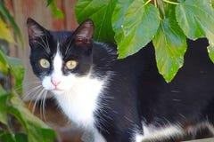 Katzenartig mit grünen Augen stockfotos